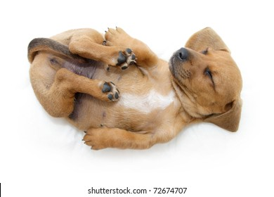 Small puppy sleeping on back