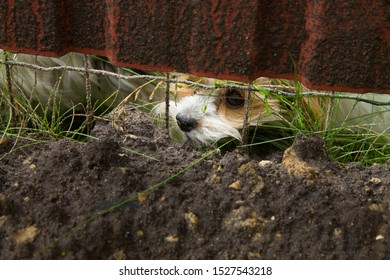 a small puppy with spotty hair sits behind a fence with its muzzle stuck out