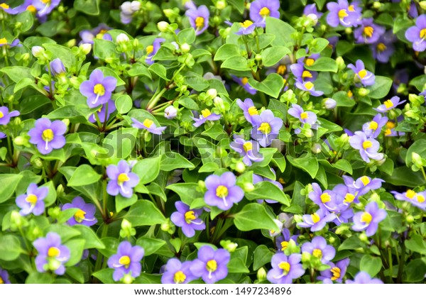 Small Purple Flowers Green Leaves Background Stock Photo Edit Now 1497234896,Goodwill Furniture Donation Drop Off
