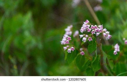 Small Purple Flowers Hanging on Shrub with copy space