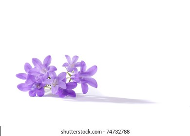 Small purple flowers, isolated