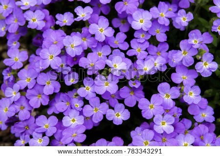 Small Purple Flowers Tiny White Yellow Stock Photo Edit Now