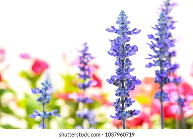 Small purple flowers together with blur and soft focus.