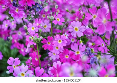Small purple flowers with water drop in Japanese garden, Toyko