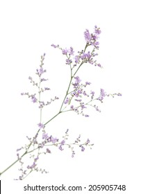small purple limonium flowers isolated on white background