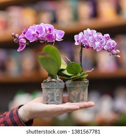 Small purple orchid flower plant on the hand
