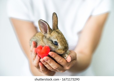A small rabbit and a heart in human hands. The concept of love , protection and conservation of animals. Rabbit close- up on the palm of the girl. Careful attitude to nature. green movement