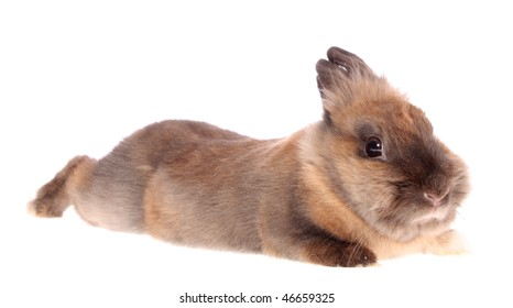 The small rabbit on a white background, is isolated.