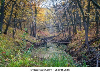 A small ravine in a quiet autumn forest, filled with water.