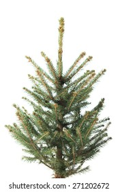 Small, real undecorated bare Christmas tree.