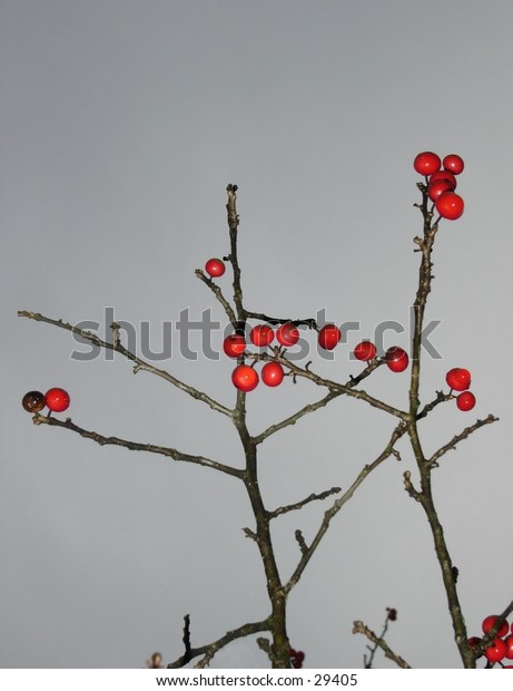 Small red berries against a rainy sky.
