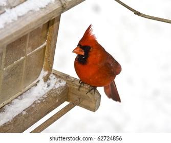 Small red cardinal sitting on bird feeder following a snowstorm