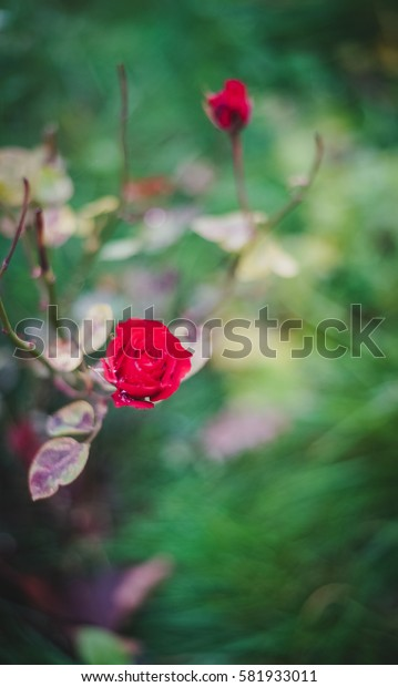 Small Red Flower. Flower Plants at the Garden. tropical flowers.
