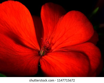 Small red flower with Soft waves of light and shadow
