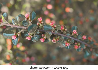 Small red flowers on branch