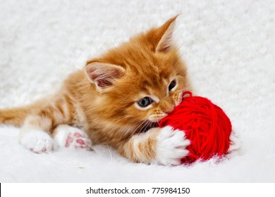 small red kitten is played with a ball of yarn