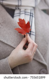 A small red leaf of a maple in the hand of a girl in an autumn coat. Macro shooting. Symbol of Canada. November, autumn.
