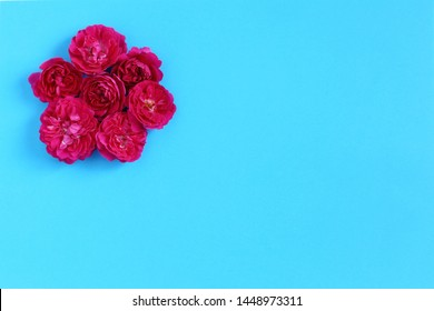 Small red rose flowers on blue background