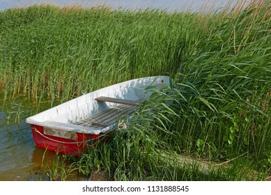 Small red and white rowing boat in reeds