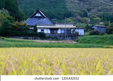 Small rice field in Japanese mountains with traditional farmhouse