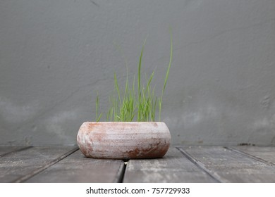 small rice grow in the pot