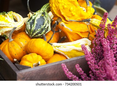 Small ripe yellow pumpkins in wooden box in Autumn