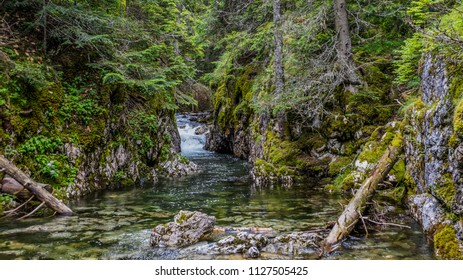 A small river flowing in the depths of the forest.