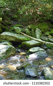 Small river in the Great Smoky Mountains NAtinal Park