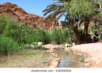 Small river with line from stones in water under palm trees. The Chebika oasis in mountains of Djebel el Negueb, Toseur, western Tunisia, Africa
