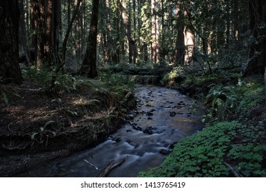 Small River in Muir Woods