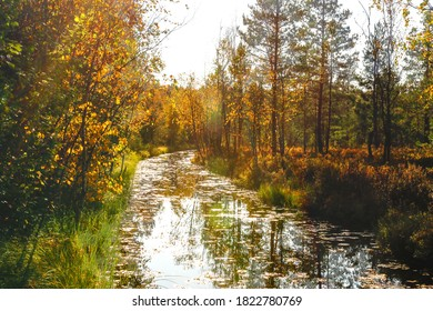 small river in nature, surrounded by trees and foliage