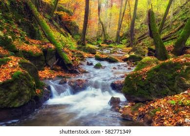 Small river running through deep forest