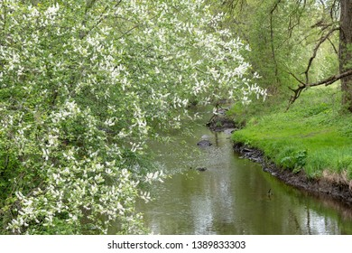 Small river in spring tome.