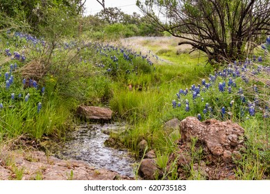 Small river stream along a Texas country road dotted with bluebonnets