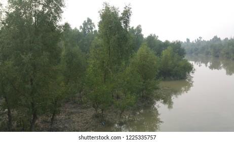 A small river through Sundarban Mangrove Forest.