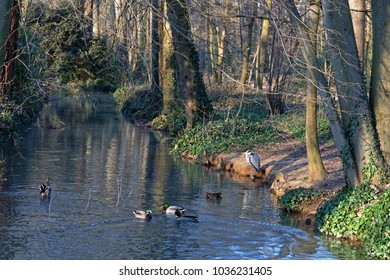 Small river in the woods of Parc de la Tete d'Or, in Lyon City center