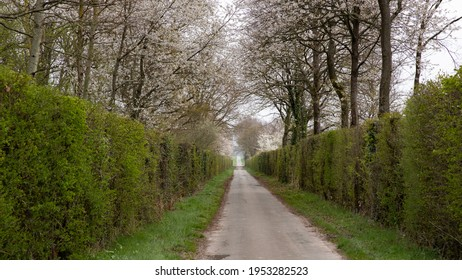 Small road in the bocage of northern France. Path between two hawthorn and blackthorn hedges. Shrubs with white flowers in spring and young green leaves. Awakening nature after winter