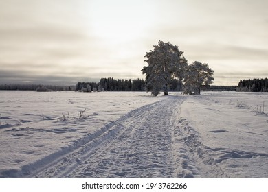 A small road leads through the snowy fiels and by two big trees. The winter sun is shining through the clouds but the weather is very cold.