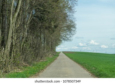Small road in the meadow fringed by the line of trees on the left side