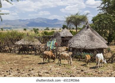 Small roadside farm. Omo valley near Konso. Ethiopia