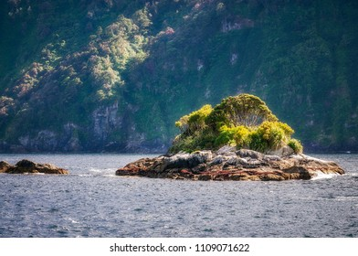 A small rocky island with briliant vegetation at Doubtful Sound close to the opening to the Tasman Sea. Adventure cruise on a day trip to Doubtful Sound in Fiordland National Park, New Zealand.