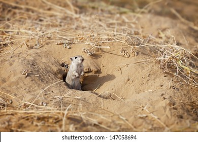 Line Drawing Of Desert Animals : Desert animals images stock photos & vectors shutterstock