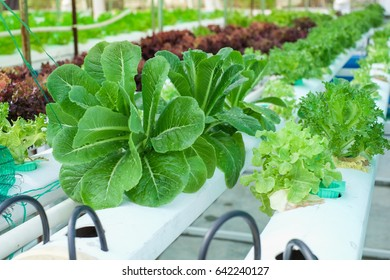 Small Rooftop Hydroponic Farming, Soil-less sky farming, Urban Gardening in Bangkok Thailand, Hydroponics method of growing plants using mineral nutrient solutions, in water, without soil.