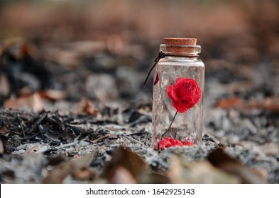 Small rose in a tiny glass bottle on dark background, small red rose in tiny glass bottle on ashes background,bad valentine.