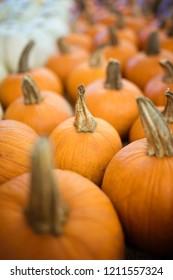 Small round orange harvest pumpkins