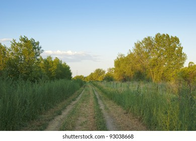Small rural dirt road leads straight forward in late afternoon on the Colorado prairie