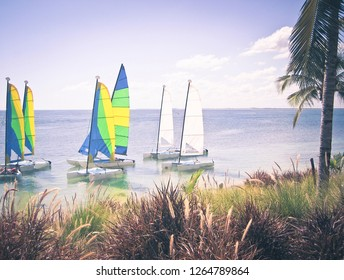 Small Sailboats in a Tropical Setting