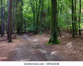 a small sandy road through a green forest