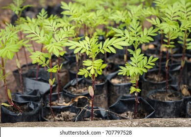 Small sapling tree in garden. Little green plant sapling agriculture concept