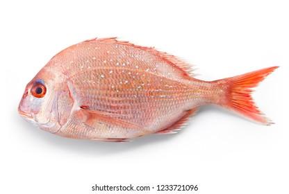 Small sea bream